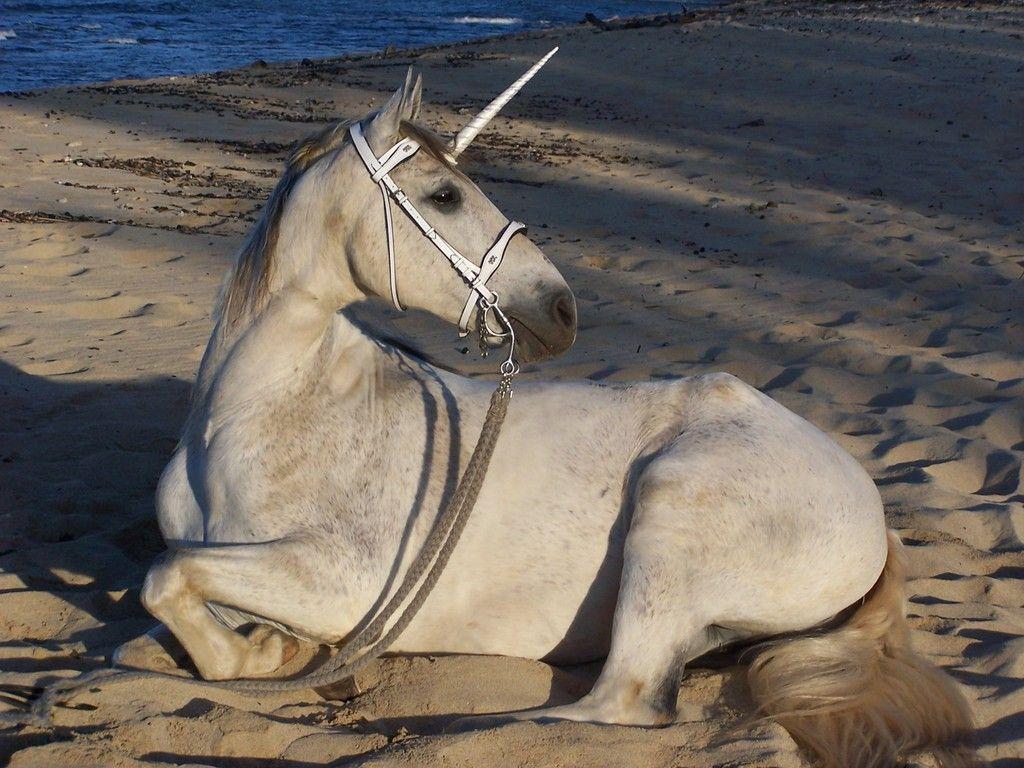 best 25 scotlands national animal ideas on pinterest unicorn