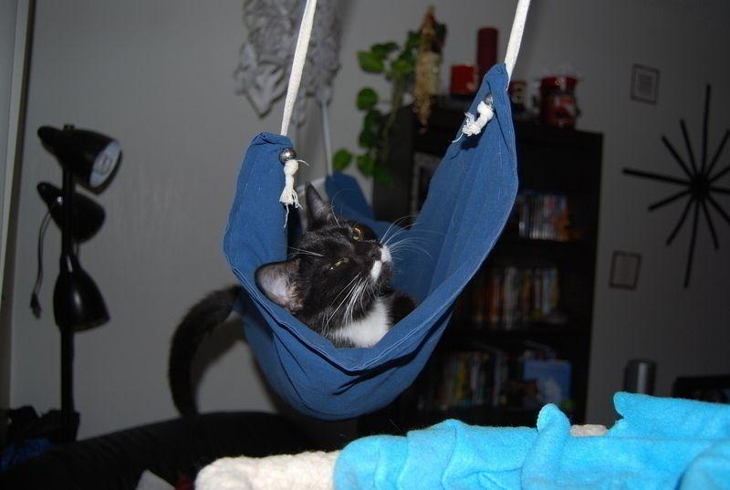 Cat Hammock | Cat hammock, Diy cat hammock, Cardboard cat ...