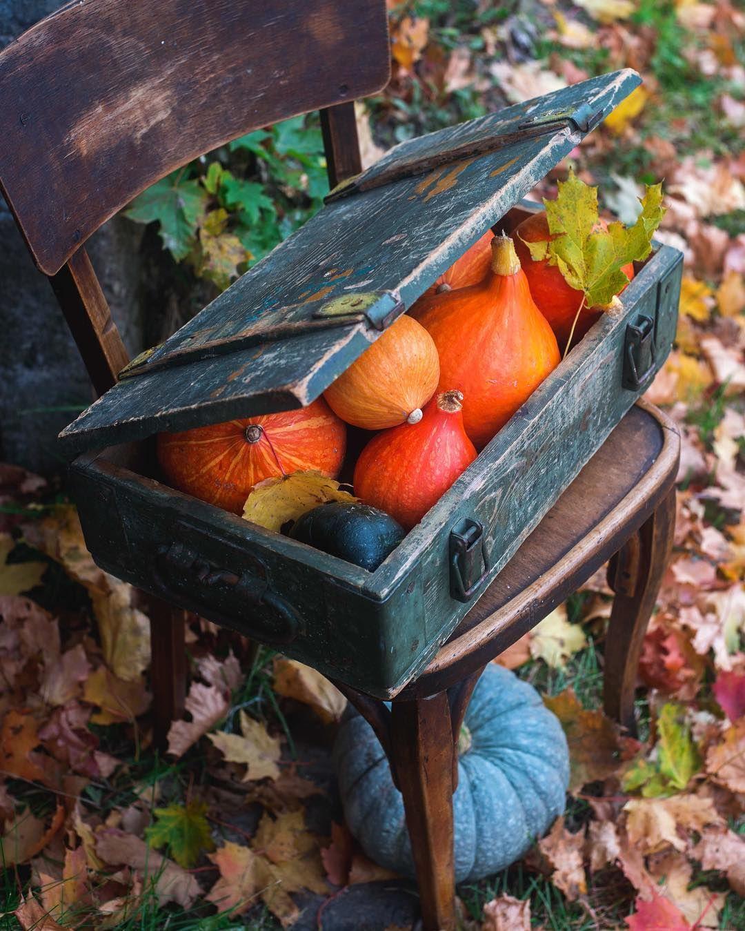 Pumpkins 🍁 Самые красивые цвета осенью 🍂🍁 Blue harvest