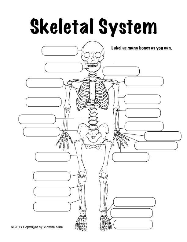 Human Anatomy Worksheet Designed By Lucid Publishing Halloween