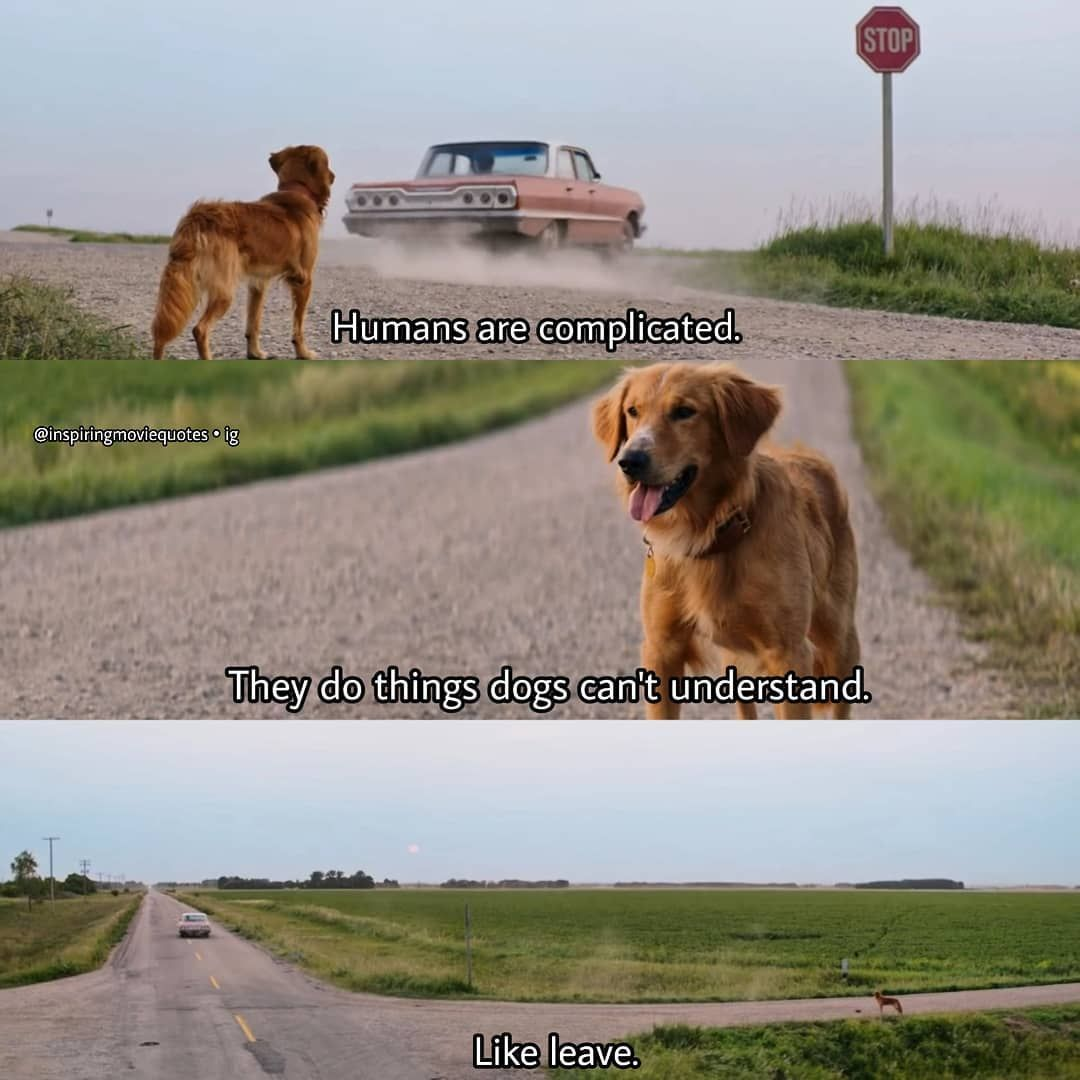 A Dog S Purpose 2017 Adogspurpose Kjapa Dennisquaid Drama Moviequote Moviequotes Watch A Dog S J A Dog S Journey A Dogs Purpose Movie A Dogs Purpose