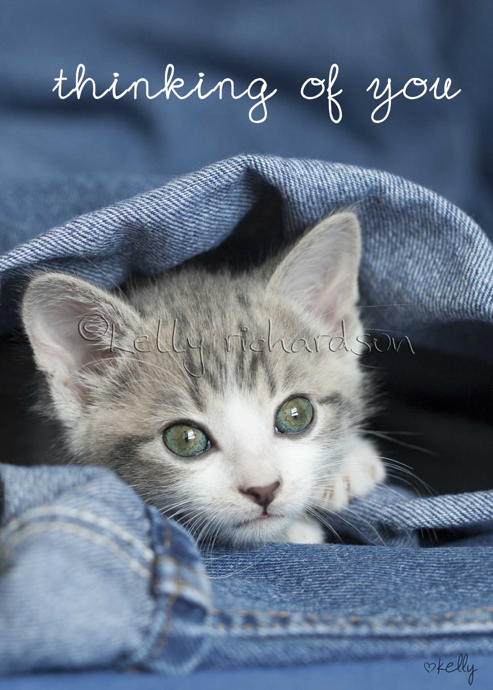 Pin by Kelly Richardson on Luvkelly Rescue Kittens | Pinterest