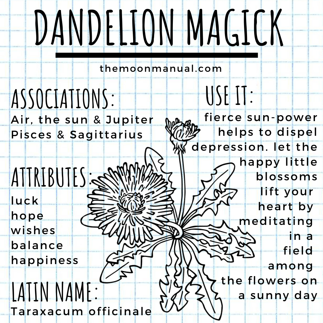 The Green Witch Diaries - Dandelion