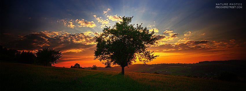 Looking for a high quality Tree of Life Sunset Facebook