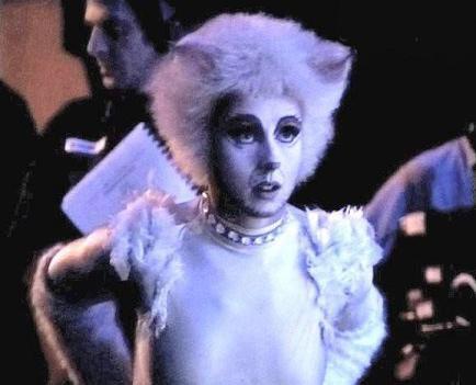 Victoria The White Cat Pretty Cats Cats Musical White Cat