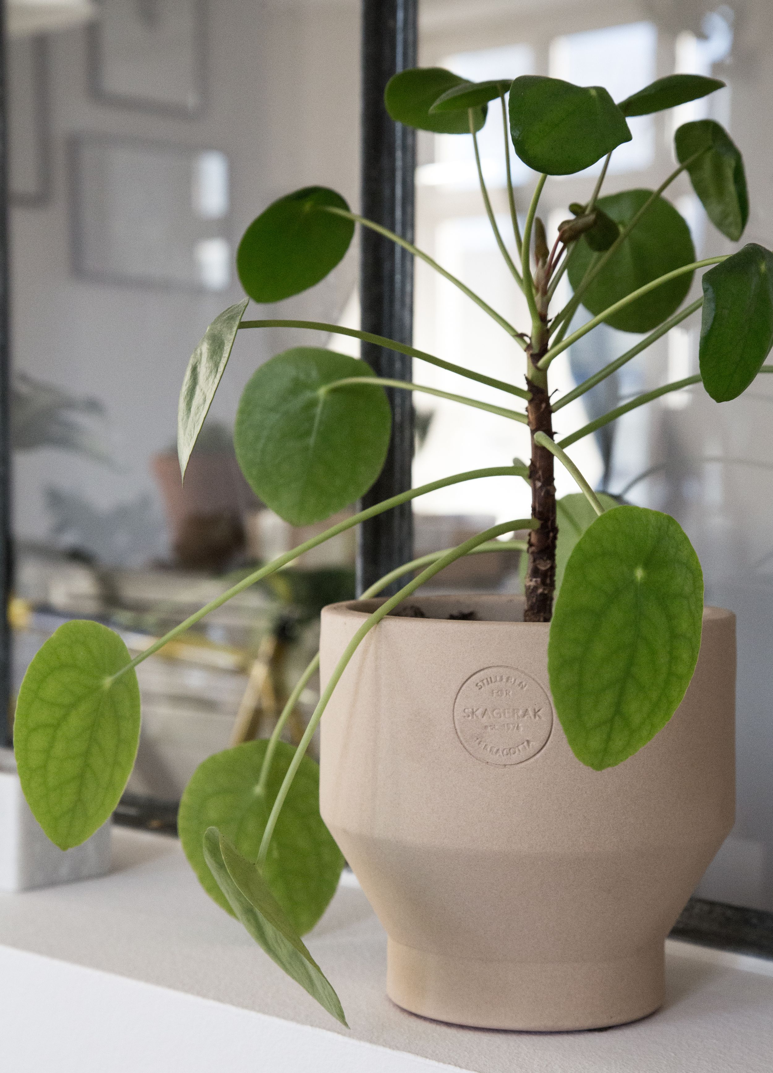 Stilleben for Skagerak edge pot -Pilea plant - Sonoma Seven