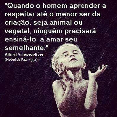 El respeto a la vida. Albert Schweitzer