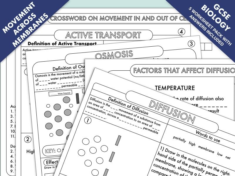 Gcse Biology Diffusion Osmosis And Active Transport Worksheet Pack Learn Biology Biology Cell Transport