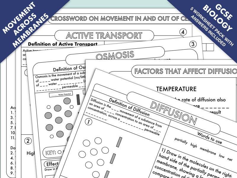 GCSE Biology Diffusion, Osmosis and Active Transport