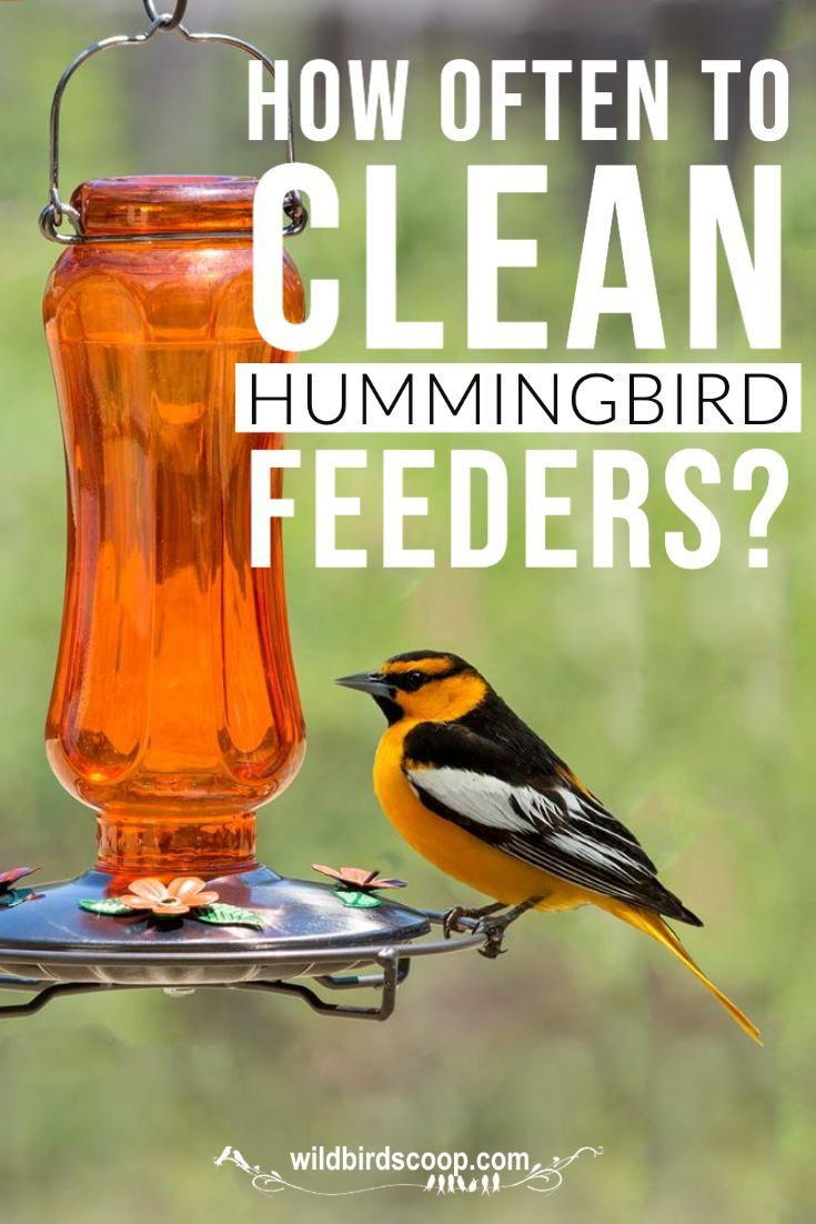 Cleaning hummingbird feeders the right way often in 2020