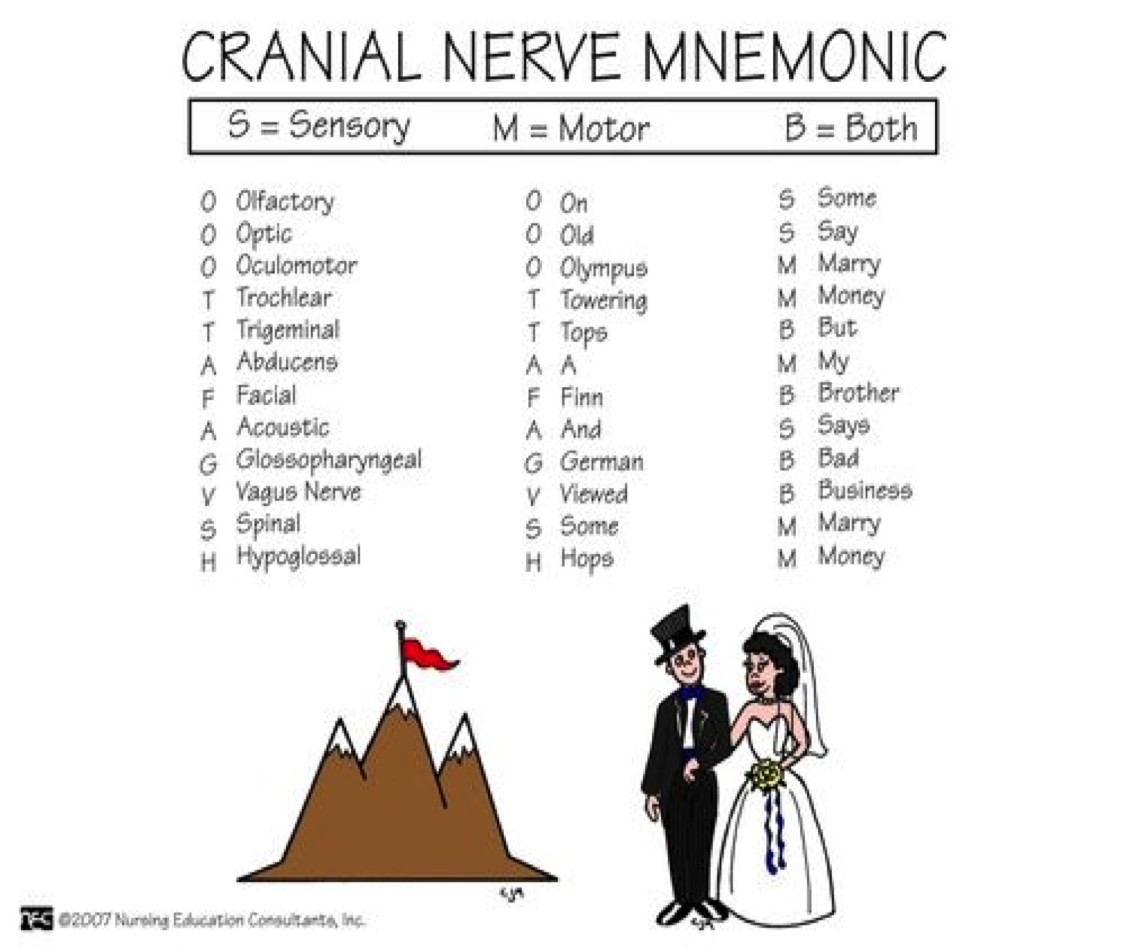 Cranial Nerve Sensory Or Motor Acronym | Newmotorspot.co