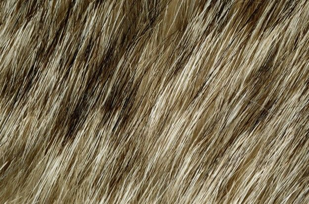 http://atextures.com/wp-content/uploads/2014/08/Animal-Fur-Skin-Background-211-625x412.jpg