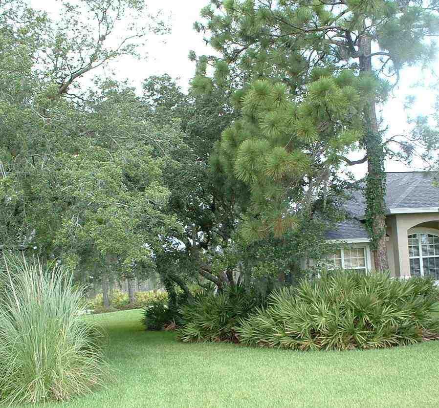 natural florida landscaping