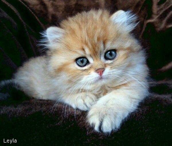 Сделать, котенок гифка привет