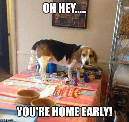 Lol Funny Dog Cute Beagles Beagle Dog Beagle Funny