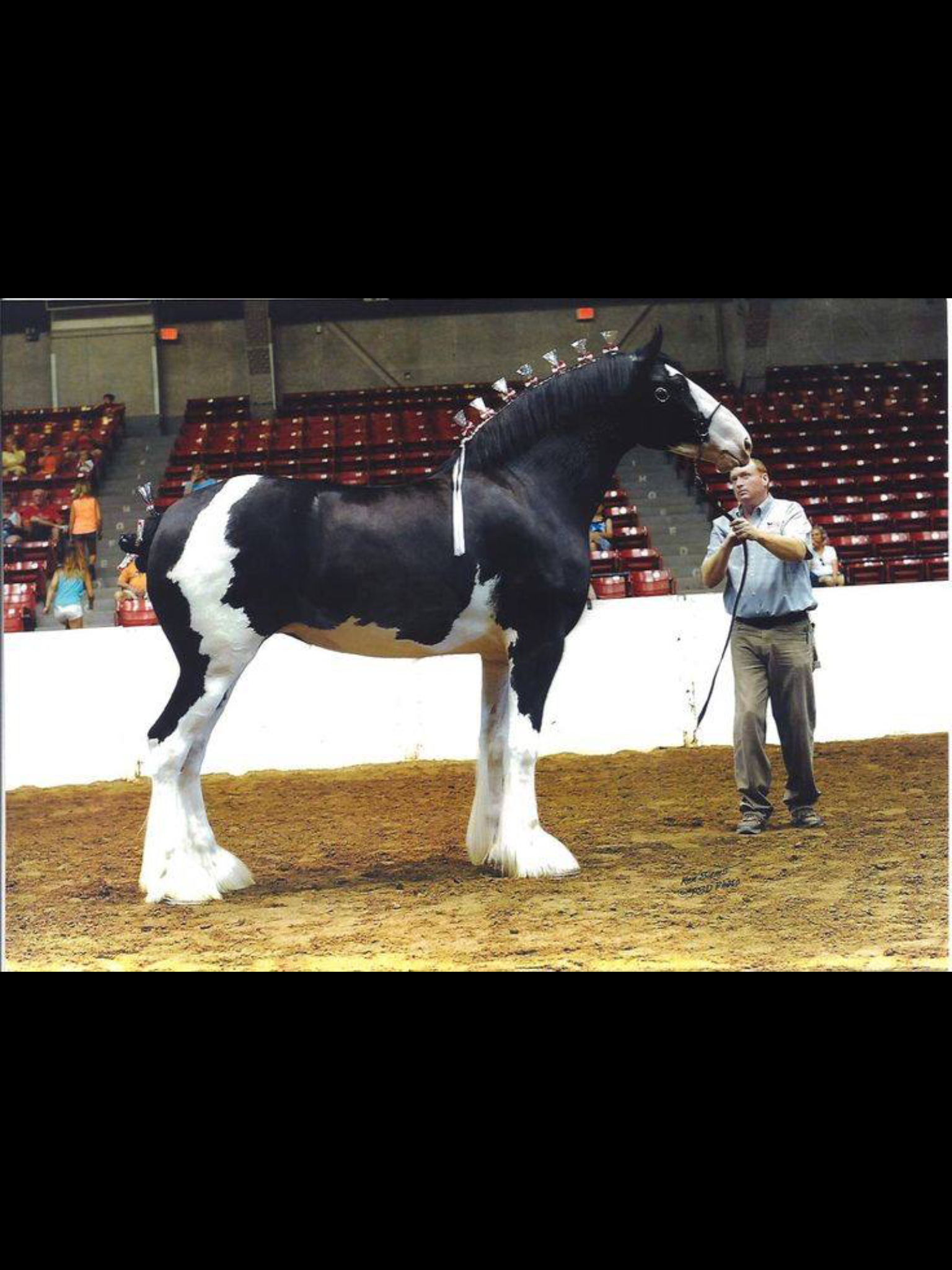 Pin By Hannah Bowers On Equines Horses Clydesdale Horses Beautiful Horses [ 2048 x 1536 Pixel ]