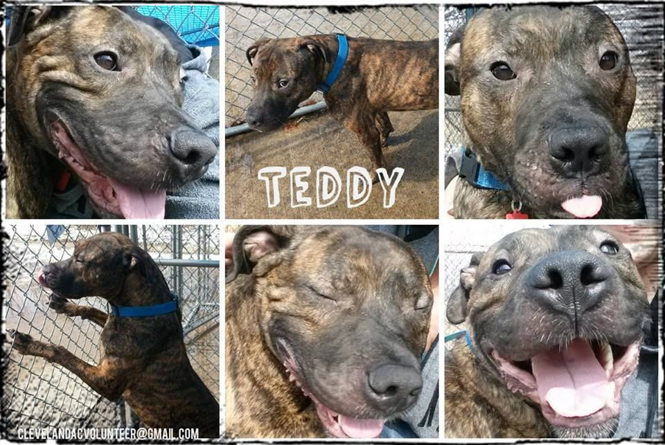 Needs Shares Pledges On Fb Have You Checked Out Teddy Yet He S A Sweet Boy Who Will Always Greet You W A Wagging Tail He Needs To Find His Special Fr Animales
