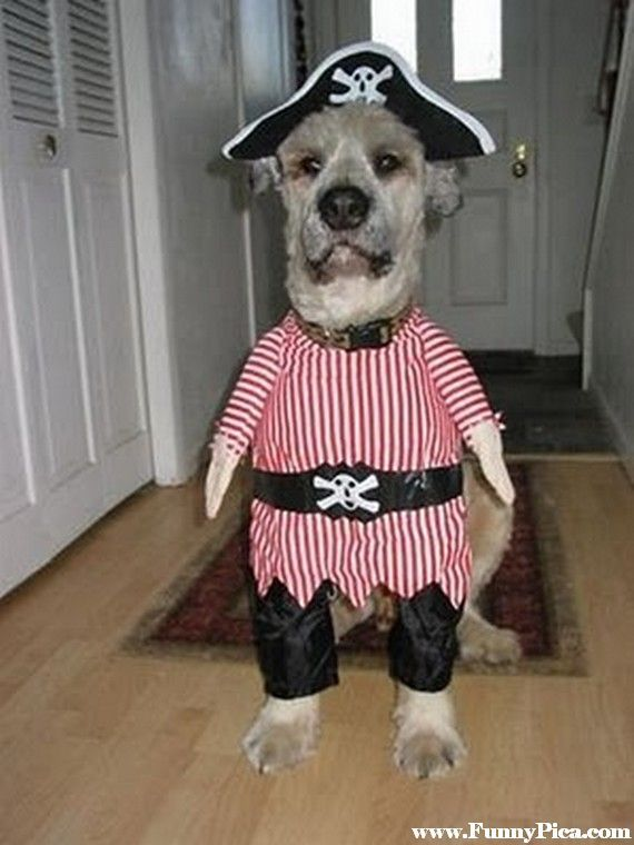 This Halloween donu0027t forget your four-legged friends. Check out these adorable costumes for your dogs and cats. Get your pets in the Halloween mood with ... & funny dog videos - Bing Images | Furry Friends.. | Pinterest ...