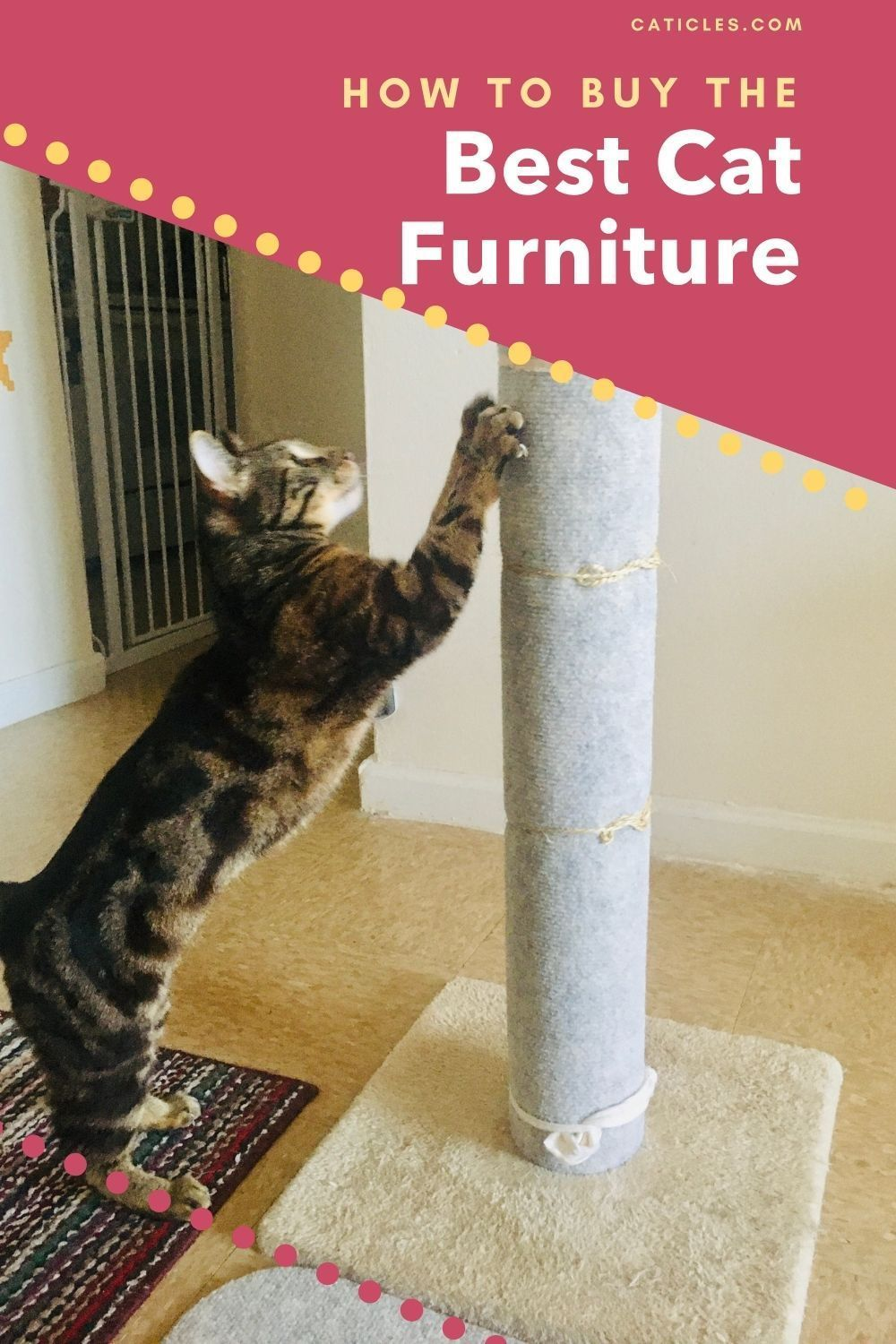 Got A Cat In A Small Apartment You Need These Modern Furniture Ideas Cat Furniture Indoor Cat Cats