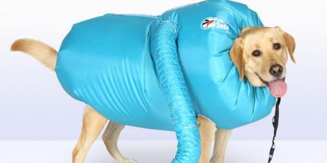 Dry Your Dog After A Bath With This Hilarious Dryer Jacket For