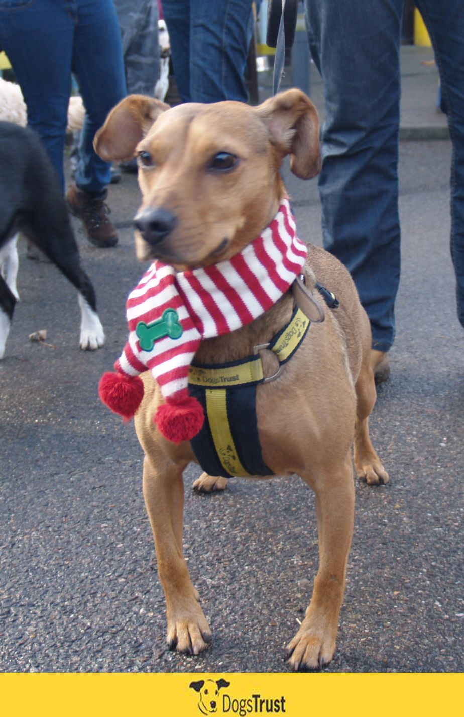Guiltfree Xmas indulgence? Yes please! Join us at Dogs