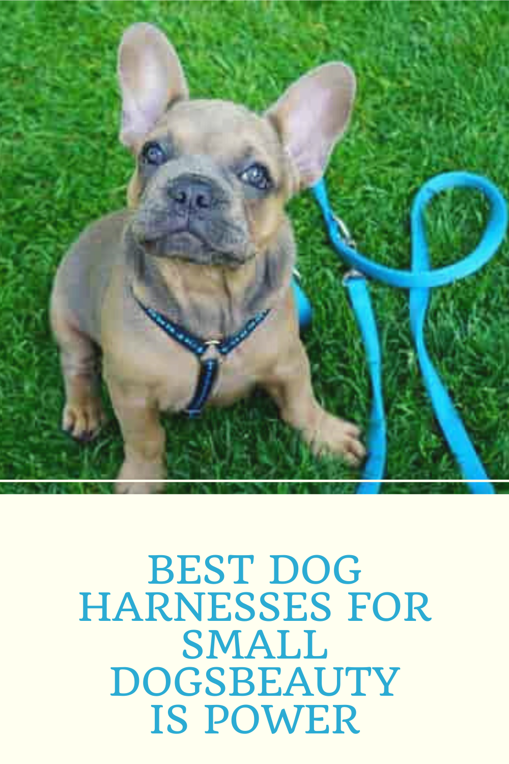 10 Best Dog Harnesses For Small Dogs In 2020 In 2020 Dog Harness Small Dog Harness Dogs