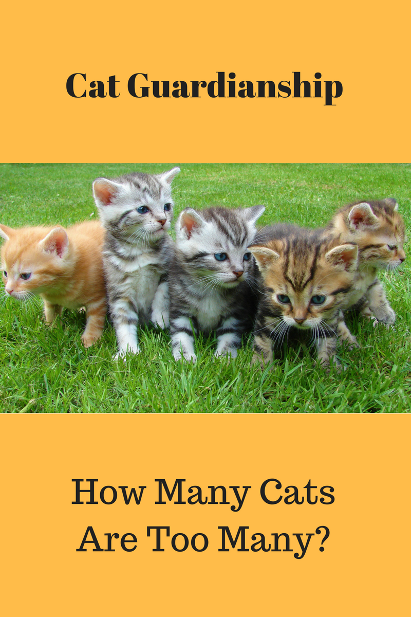 how many cats are too many