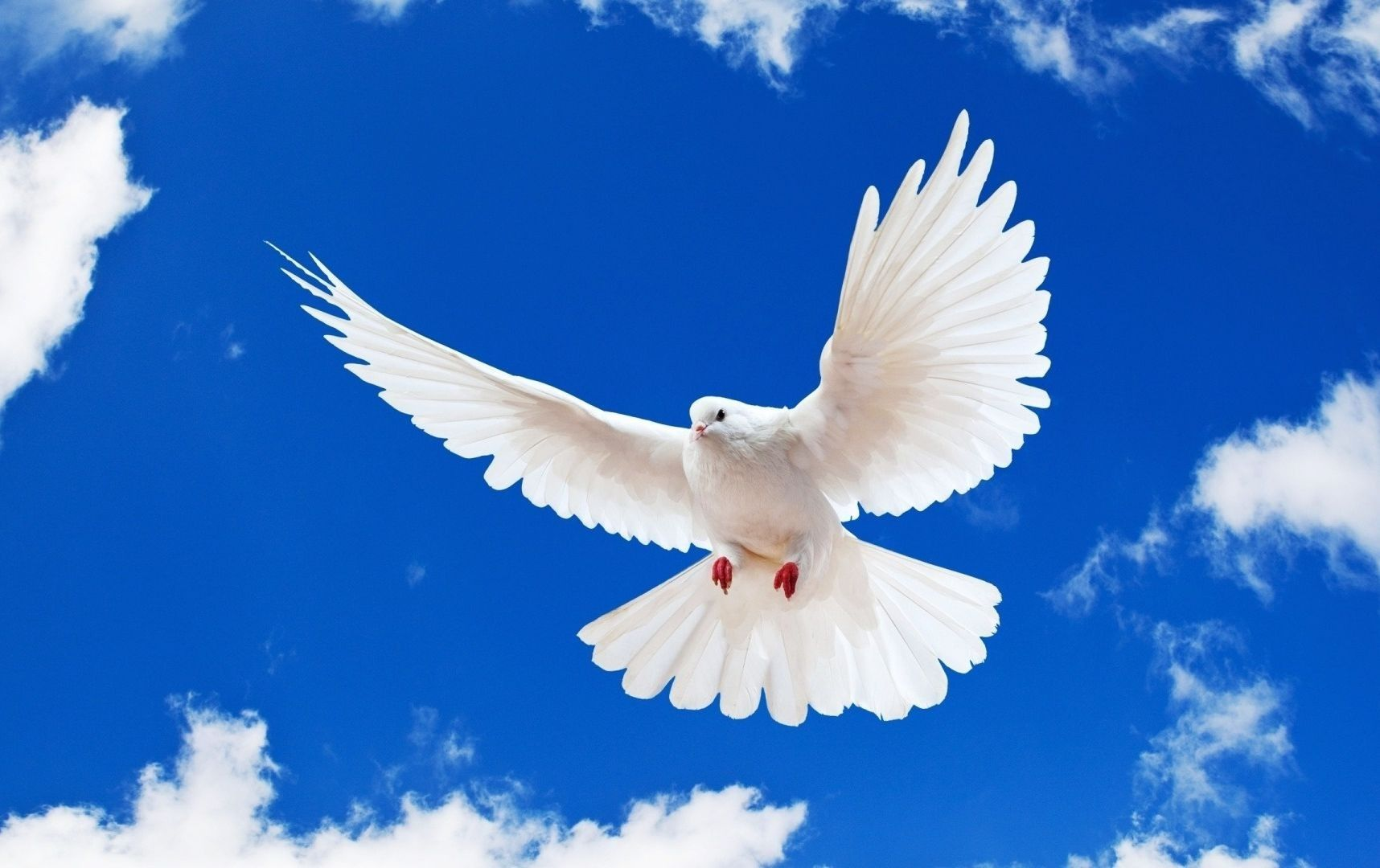 Blue Sky White Dove Flying New Desktop Wallpaper In Hd Free Dove Images Bird Wallpaper Birds Flying