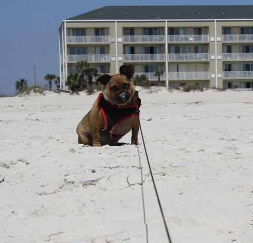 Krystal Lynn's first visit to the beach.
