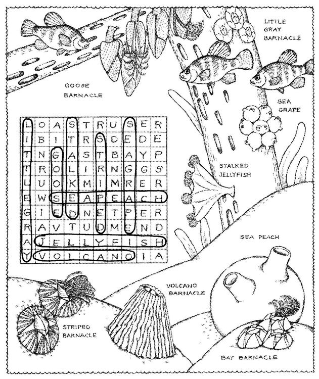 Welcome to Dover Publications Seashore Activity Book Word