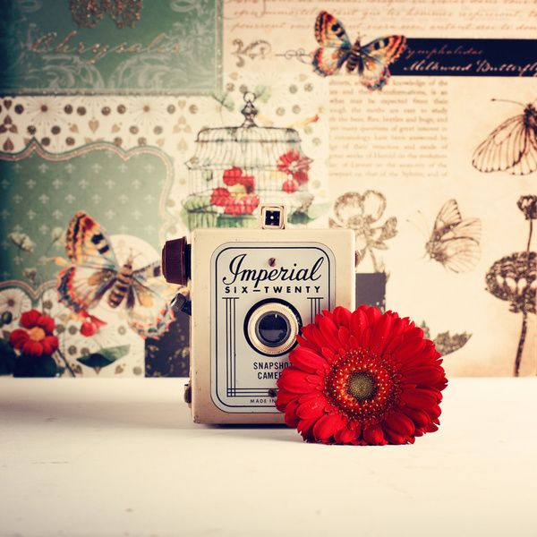 Retro Camera And Red Flower Retro And Vintage Still Life Photography Art Print By Ac Photography Society Retro Camera Pastel Cameras Still Life Photography