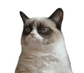 Grumpy Cat No Png Image With Transparent Background Png Free Png Images In 2021 Meme Faces Funny Memes Grumpy Cat