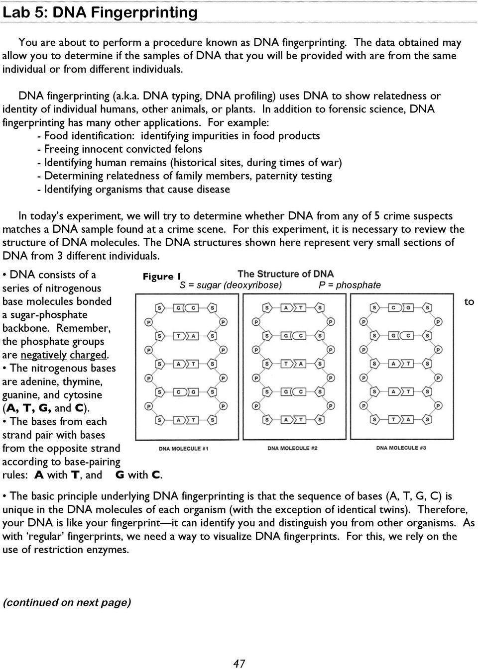Dna Fingerprint Worksheet Answers Lab 5 Dna Fingerprinting Pdf Free Download In 2020 Dna Fingerprinting Text Features Worksheet Graphing Linear Equations