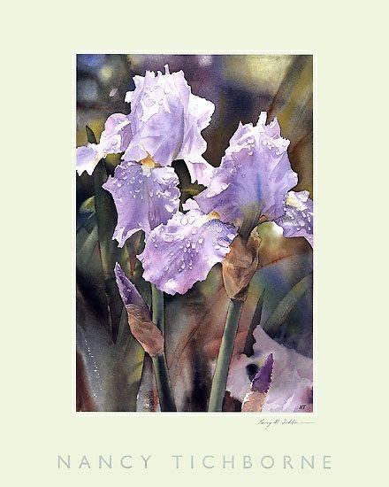 Watercolour Iris by Nancy Tichborne