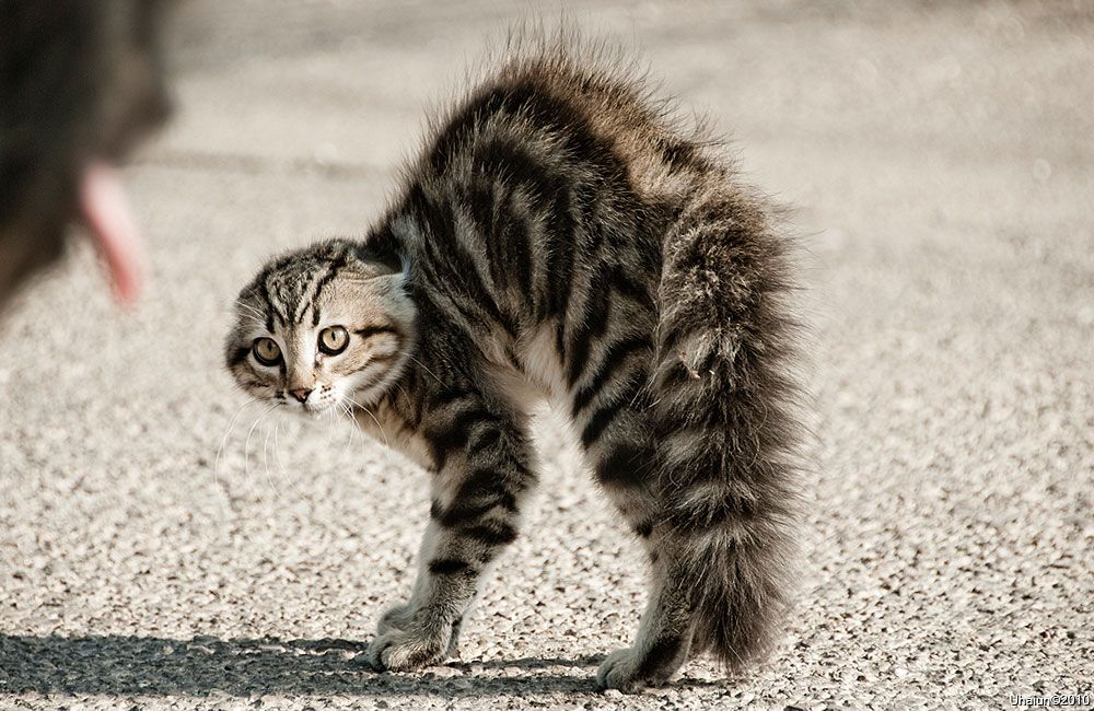 Poor kitty! What are you afraid of????
