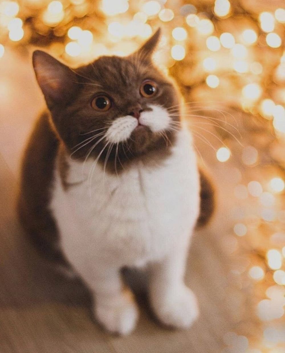 Online Store I Love Cats Christmas Cats Cute Dogs