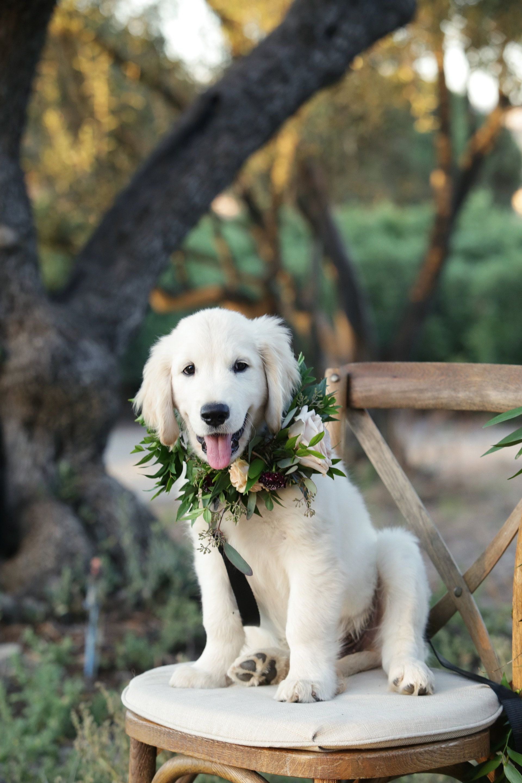 Lush Fruit Accented Styled Shoot Santa Barbara Ca Wedding Pets Animals Labrador Retriever