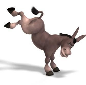 Image result for image of mule kicking