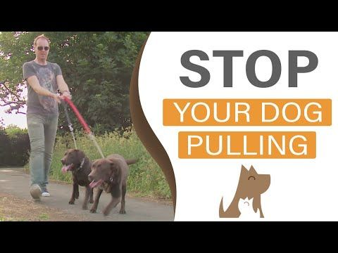 How To Train Your Dog To Walk To Heel The Dog Guardian Youtube