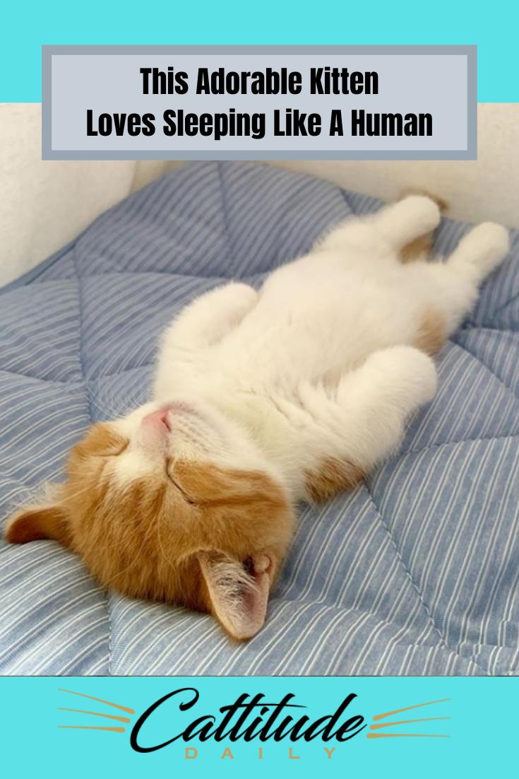Chata The Kitten Sleeps Like A Human Sleeping Kitten Adorable Kittens Funny Kittens Funny