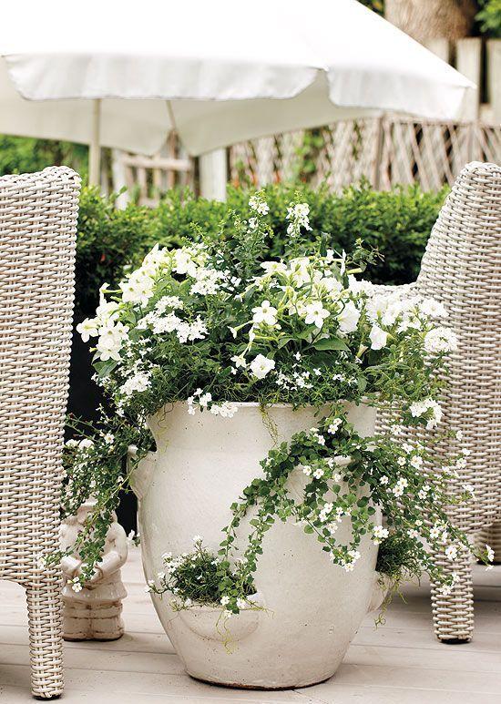 Flowersgardenlove Bright White Flowers In A Large Pot Very Striking Flower Garden Garden Containers Moon Garden