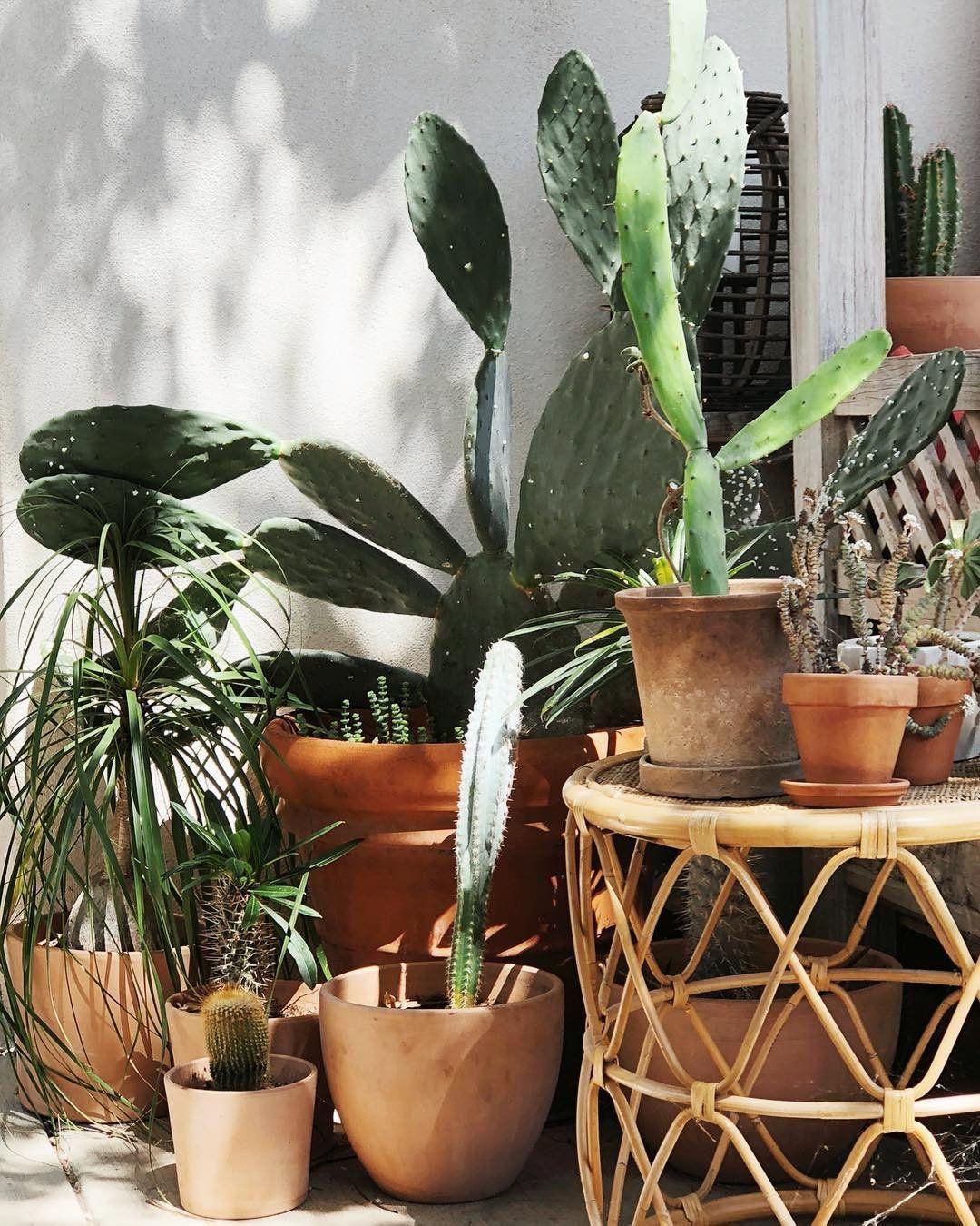 Nursery Indoor Plants Near Me: Interior Styling Blog (@ashleyhosmer) • Instagram Photos