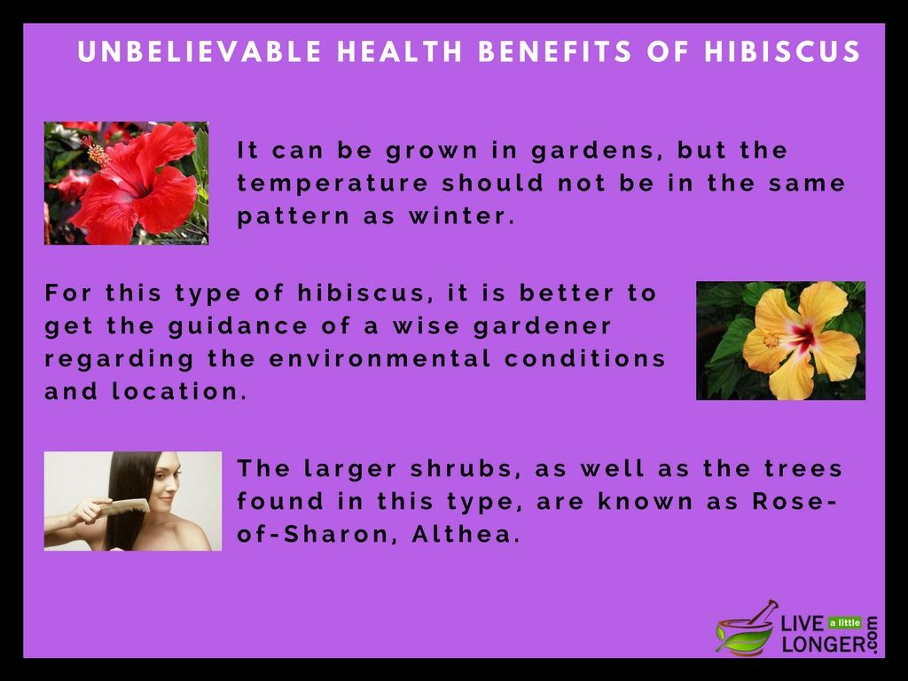 Health benefits of hibiscus tea and flower are plenty hibiscus health benefits of hibiscus tea and flower are plenty hibiscus flower has more medicinal properties and surprising health facts most of people takes daily izmirmasajfo