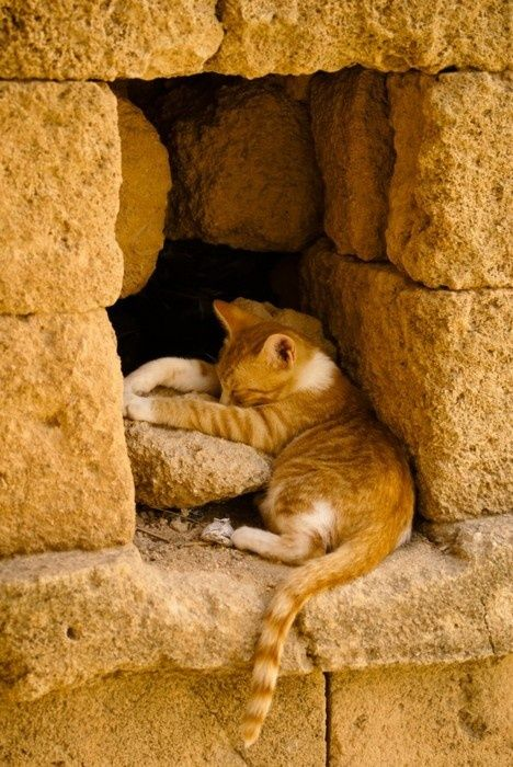 Relaxed kitten in the warm stones.  ^..^