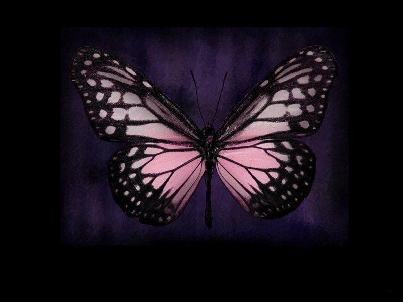 Pink And Black Butterfly With Images Butterfly Pictures