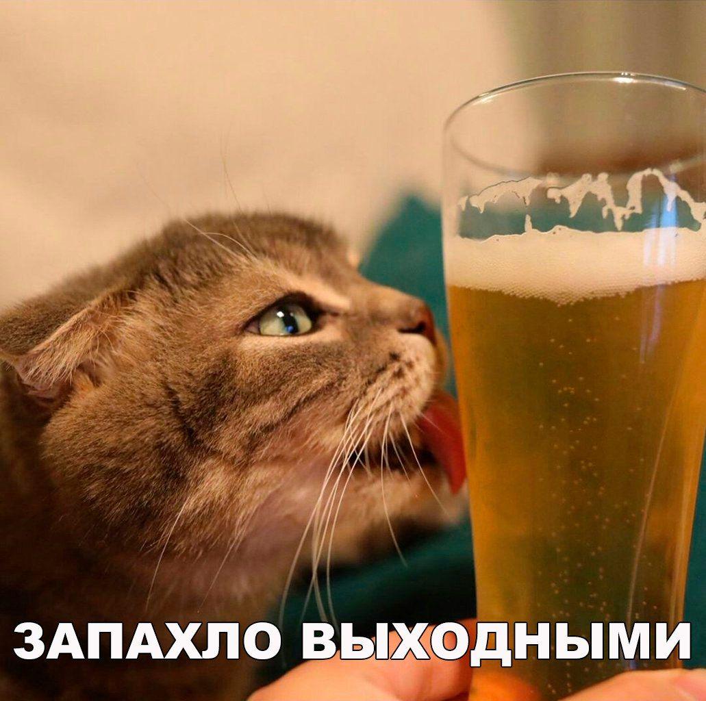 решились фото ура пятница прикольные картинки пиво мошки клубнике