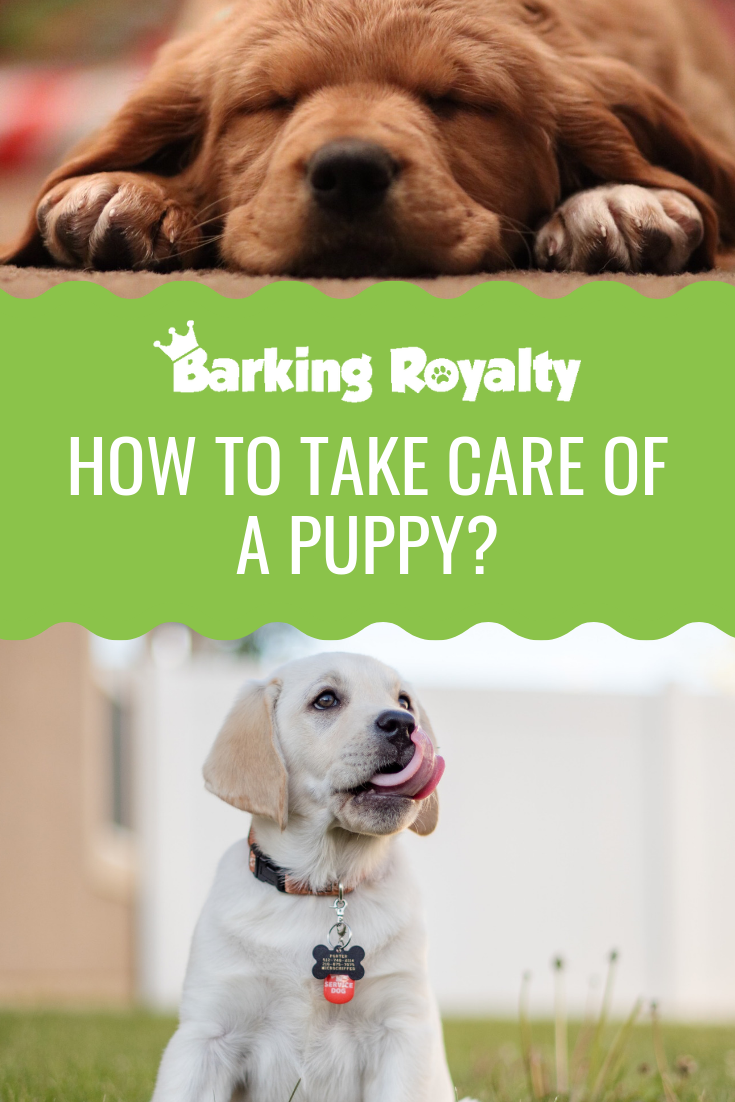 How To Take Care Of A Puppy? Complete Guide (With images