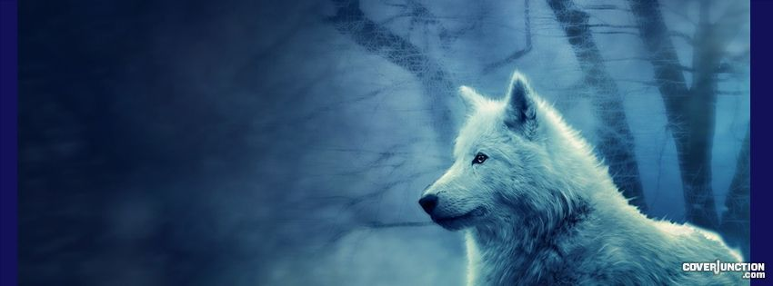 Indian Wolf Facebook Cover Photos Google Search Wolf Images