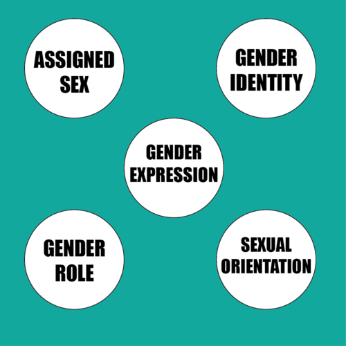 This venn diagram shows the relationships between assigned sex this venn diagram shows the relationships between assigned sex gender identity gender expression ccuart Gallery
