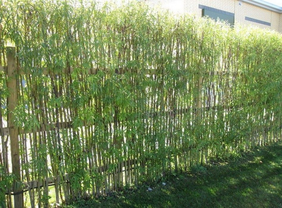 Lovely Bamboo Fencing Design Ideas For Your Inspiration: Natural Small Bamboo  Plants Fencing Choosing Beautiful